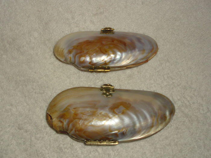 Two shell purses, France, 1890-1910