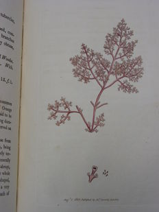 James Edward Smith - English botany - Volume 17/18 - 1803/1804