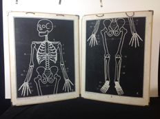2 school posters human skeleton Poster 1 and 2 together form a human skeleton in white against a black background