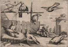 Francis Barlow (1626-1704) - Eight pigeons in a farmyard with a dovecote in the background
