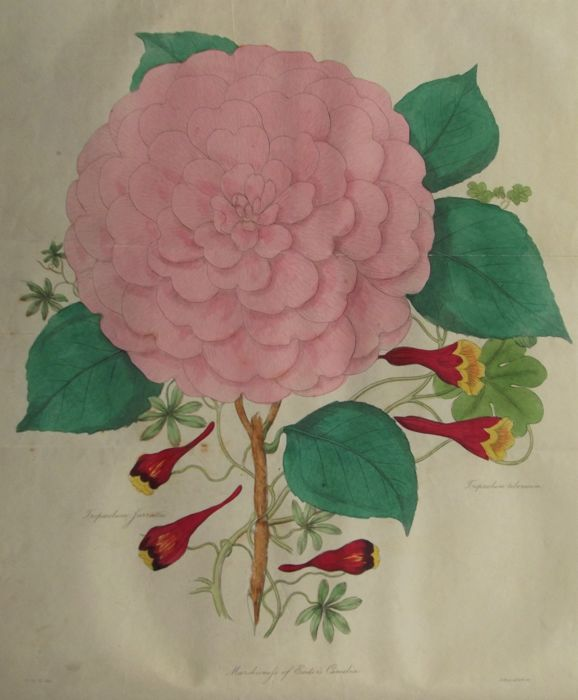 Joseph Harrison - The Floricultural Cabinet and Florist's Magazine January to December - vol. VI - 1838/1839