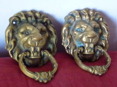 A pair of knockers in the shape of a lion's head that bites the clapper with its teeth - Baroque style brass - Italy - recent