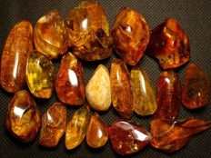 Natural Baltic Amber, Excellent Quality - 515 ct.