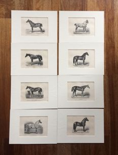Eight horse prints from an illustrated handbook for every owner and lover of horses. by E.A.L. Quadekker, captain-horse doctor