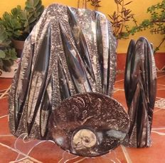 Plaque, sculpture and tray carved in fossil stone with ammonites and orthoceras - 6.570 kg (3)