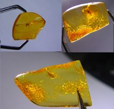Baltic Amber with insects and inclusions - 18 x 11 x 4 mm - 18 x 11 x 5 mm et 17 x 14 x 4 mm (3)