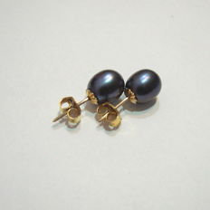 Earrings with freshwater pearls smooth graphite colour, with 14k Yellow gold, diameter 8.75mm/7.25mm class AAA