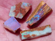 Lot of Colorful Australian Opal Wood Fossil - 10 to 21 mm - 23.3 cts (4)