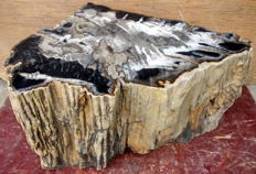 Trunk of petrified wood - 34,5 x 63 x 47 cm - 122 kg