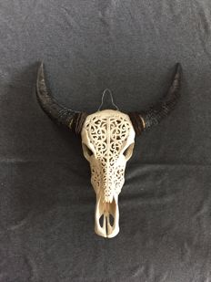 Taxidermy - finely carved Water Buffalo skull - Bubalus bubalis - 64 x 55cm
