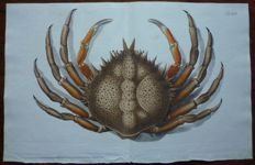 4 original 18th century engravings of crabs and lobster