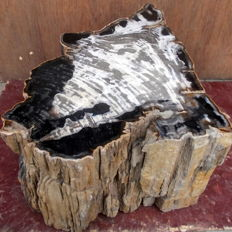 Trunk of petrified wood - 35,5 x 57 x 44,5 cm - 112 kg