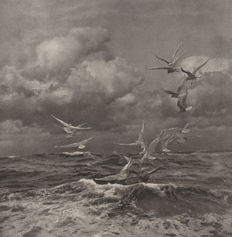 Francis James Mortimer (1874-1944) - Seagulls at rough sea
