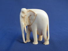 Ivory image of an Indian Elephant - India - 1900