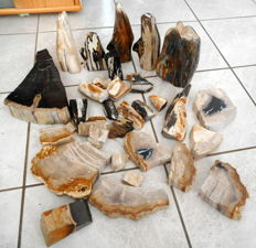 Large lot of pieces of polished Petrified wood - 50-210 mm - 16.8 kg (35+)