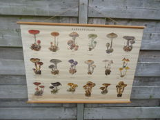 Beautiful school poster with mushrooms (this concerns poster I)