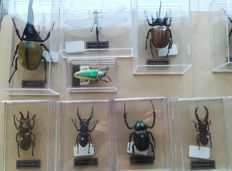 Collection of true-to-life replica Insects, with scientific names - 9 to 18cm  (40)