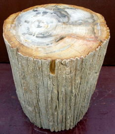 Trunk of petrified wood -33 x 27,5 x 26 cm - 44 kg