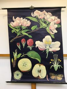 School poster Apple tree
