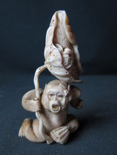 Superb ivory okimono of a monkey - Japan - circa 1900 (Meiji period)