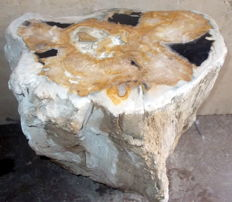 Side table - trunk of petrified wood - 40 x 39 x 30 cm - 67 kg