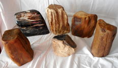 11 trunks of petrified wood - 10 to 18 cm - 14.8 kg