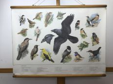 School poster 'Songbirds' by HJ Slijper