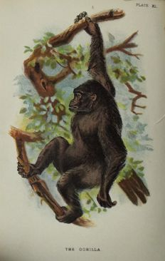 Henry O. Forbes - A Handbook to the Primates - 2 volumes - 1896