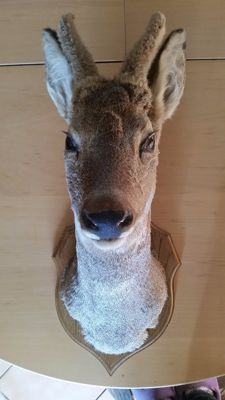 Stuffed deer head