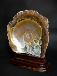 Engraved pearl oyster with skull carving - Bali - Indonesia - 21th century
