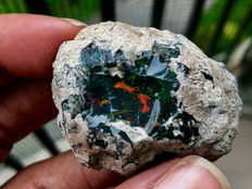 Very Precious Natural Black Opal - 4 x 2.7 x 2 cm - 140.5 ct