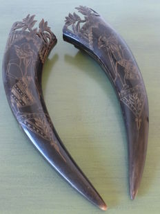 Pair of buffalo horns - Indonesia - 2nd half 20th century