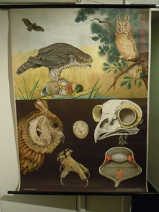 Old zoological school poster Biology Jung Koch Quentell Birds of prey Owl