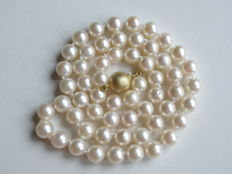 Akoya cultured pearls, necklace approx. 6.4 mm