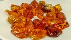 Lot of Natural Honey Colour Baltic Amber pieces - 192 gr