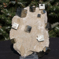 Cubic Pyrite crystals on matrix - 19 x 14cm - 1620 g