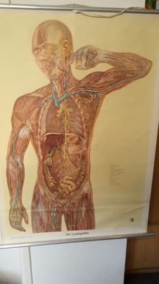 Anatomical school map of the lymphatic system
