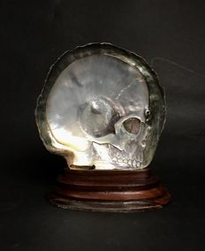 Engraved pearl oyster with skull motive - Bali - Indonesia