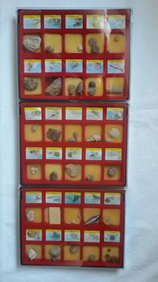 Collection of Certified Fossils (60) (6 boxes)
