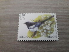"Belgium 2001 - stamp ""Magpie"" from Buzin with a shifted print as peculiarity - OBP 2988P8a - Cu"