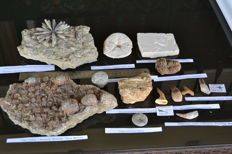 Ammazing collectionof  fossils from Morocco -  40 - 270 mm (13)