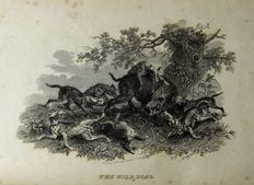 Recreations of Natural History; or, Popular Sketches of British Quadrupeds - 1815