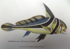 2 x George Shaw (1751-1813) - American Knight Fish - Anthia Sparus - fine hand colour - 1804