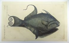 Francis Willughby (1635-1672); John Ray - Amazonian Guaperva Fish - Folio copper engraving with hand colour - 1686