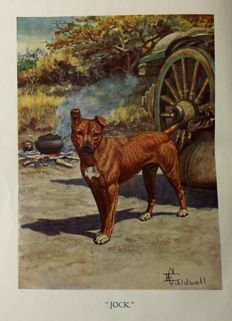 Sir Percy Fitzpatrick - Jock of the Bushveld - 1913