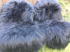 A fine pair of large black-dyed Sheep Skins (Ovis aries) -125 x 80 cm (2)