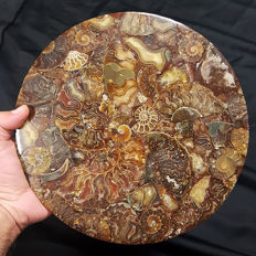 Nicely polished disc made of ammonites marble - 280 x 7 mm - 1.2 kg