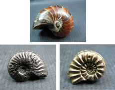 A Nautilus and two pyritised Ammonite fossils - 1.85 – 3.60 cm (3)