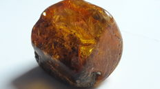 A rare coloured Baltic Amber  with multople inclusions - 50 x 45 mm - 44,8 g.