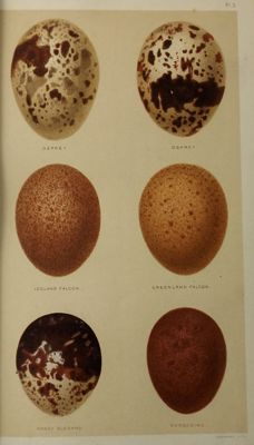 Henry Seebohm - A History of British Birds with Coloured Illustrations of their Eggs - 2 volumes - 1883/1884